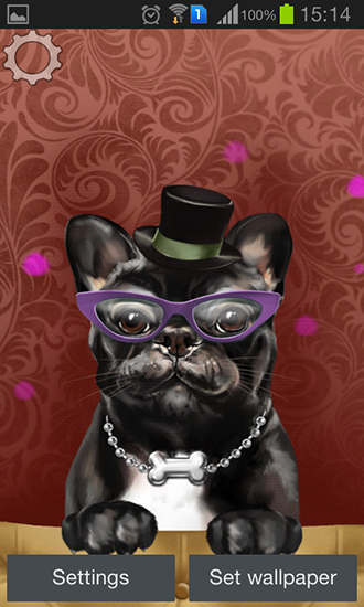 Download livewallpaper French bulldog for Android. Get full version of Android apk livewallpaper French bulldog for tablet and phone.