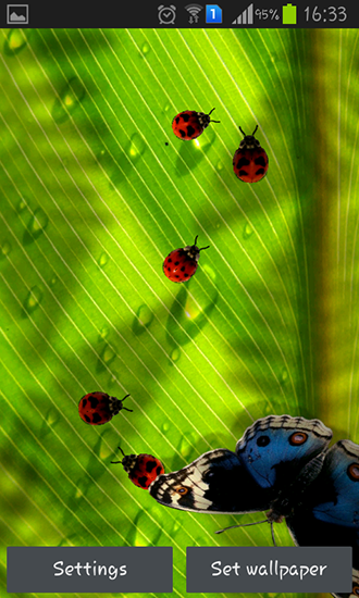 Download Friendly bugs - livewallpaper for Android. Friendly bugs apk - free download.