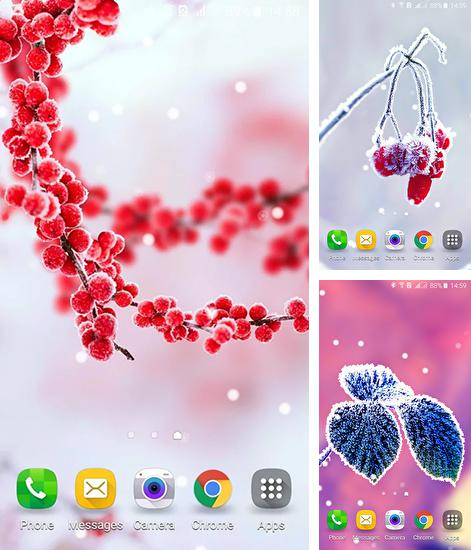 In addition to live wallpaper Shiny butterfly for Android phones and tablets, you can also download Frozen beauty: Winter tale for free.