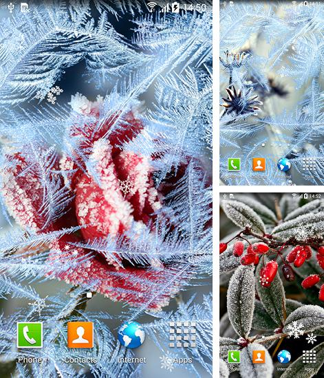 In addition to live wallpaper Heart clock for Android phones and tablets, you can also download Frozen flowers for free.