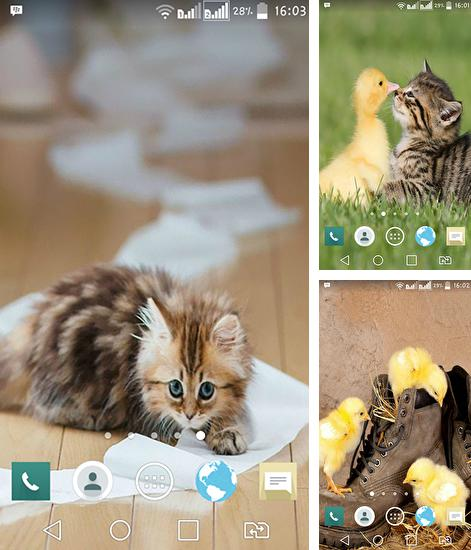 In addition to live wallpaper Analog clock by Weather Widget Theme Dev Team for Android phones and tablets, you can also download Funny animal for free.