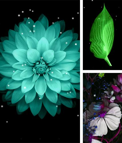 Download live wallpaper Galaxy flowers for Android. Get full version of Android apk livewallpaper Galaxy flowers for tablet and phone.