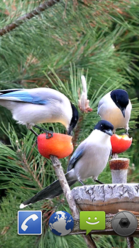 Download livewallpaper Garden birds for Android. Get full version of Android apk livewallpaper Garden birds for tablet and phone.