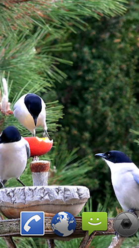 Download Garden birds - livewallpaper for Android. Garden birds apk - free download.