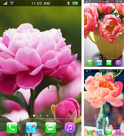 In addition to live wallpaper Native american 3D pro full for Android phones and tablets, you can also download Garden peonies for free.