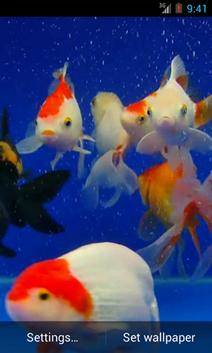 Screenshots of the Gold fish for Android tablet, phone.