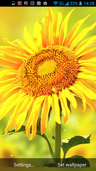 Screenshots von Golden sunflower für Android-Tablet, Smartphone.