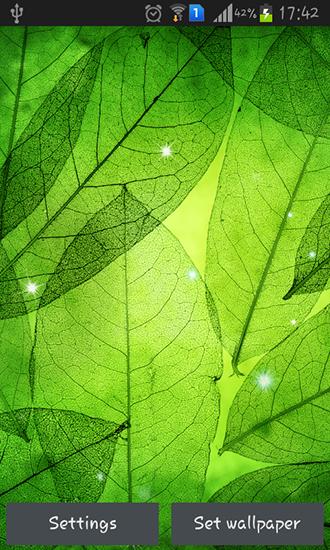Картинки Зеленые Обои На Телефон