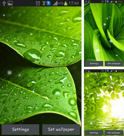 In addition to live wallpaper My name for Android phones and tablets, you can also download Green leaves for free.