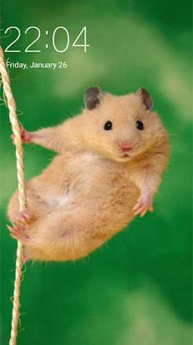 Download livewallpaper Hamster for Android. Get full version of Android apk livewallpaper Hamster for tablet and phone.