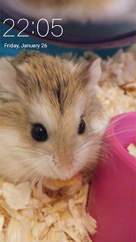 Screenshots of the Hamster for Android tablet, phone.