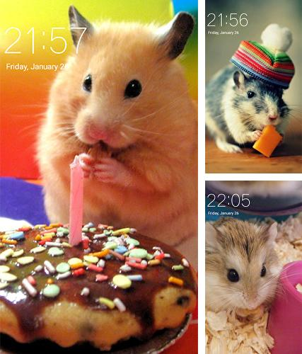 Download live wallpaper Hamster for Android. Get full version of Android apk livewallpaper Hamster for tablet and phone.