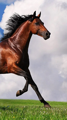 Download Horse by Happy live wallpapers - livewallpaper for Android. Horse by Happy live wallpapers apk - free download.