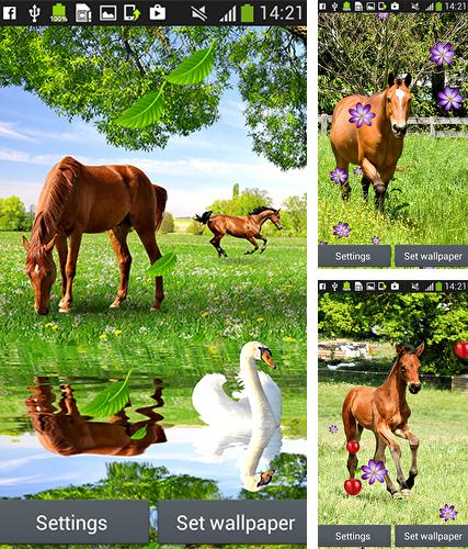 Baixe o papeis de parede animados Horses by Latest Live Wallpapers para Android gratuitamente. Obtenha a versao completa do aplicativo apk para Android Horses by Latest Live Wallpapers para tablet e celular.