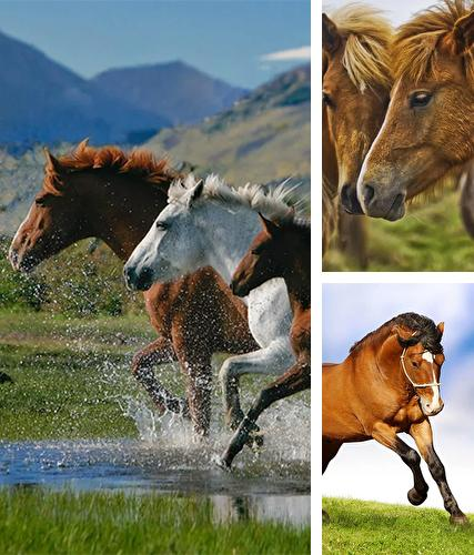 Horses by Pro Live Wallpapers