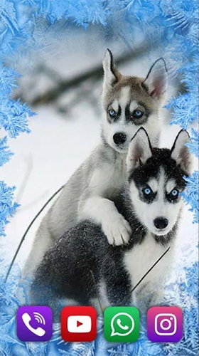 Kostenloses Android-Live Wallpaper Husky. Vollversion der Android-apk-App Husky by SweetMood für Tablets und Telefone.