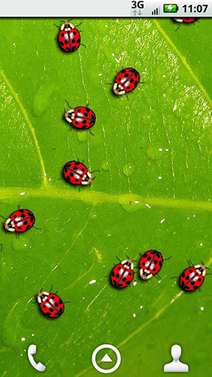 Download livewallpaper Ladybugs for Android. Get full version of Android apk livewallpaper Ladybugs for tablet and phone.