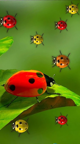 Ladybugs By 3d Hd Moving Live Wallpapers Magic Touch Clocks Live
