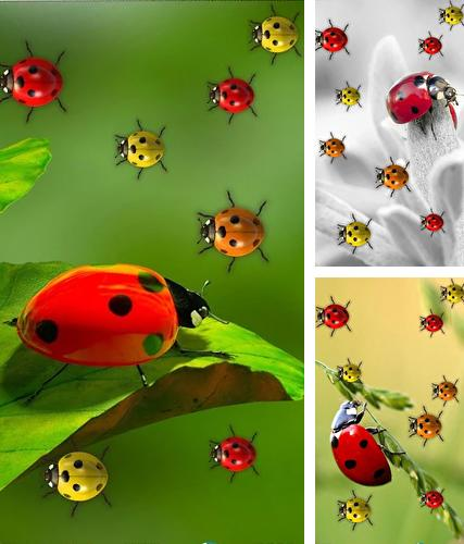 Ladybugs by 3D HD Moving Live Wallpapers Magic Touch Clocks
