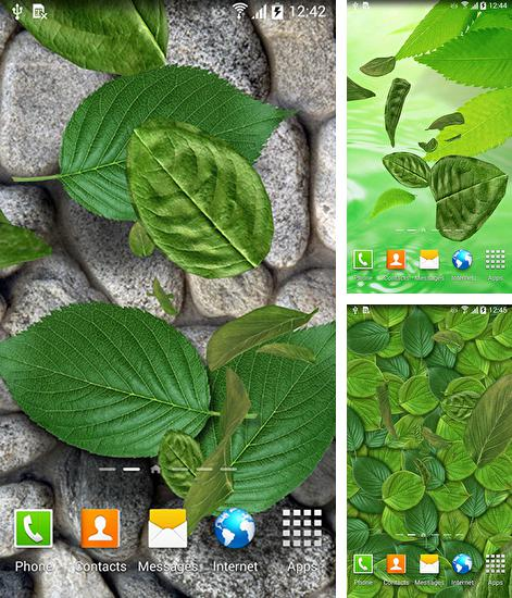 Download live wallpaper Leaves 3D for Android. Get full version of Android apk livewallpaper Leaves 3D for tablet and phone.