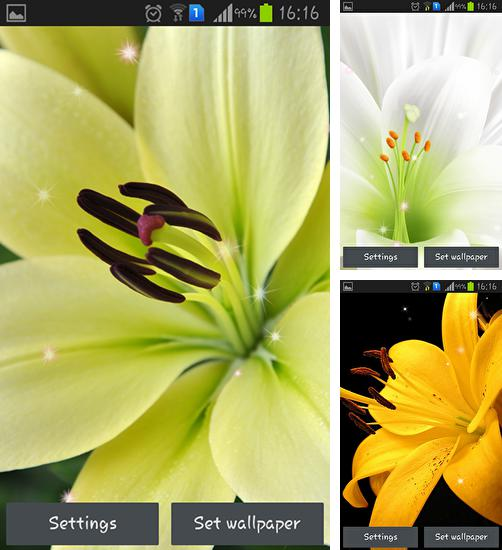 In addition to live wallpaper Aquarium 3D by Shyne Lab for Android phones and tablets, you can also download Lily for free.