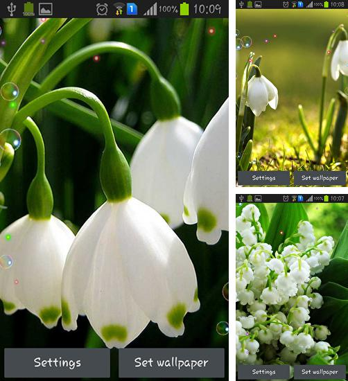In addition to live wallpaper Leaves 3D for Android phones and tablets, you can also download Lily of valley forest for free.