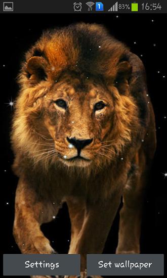 Lion Für Android Kostenlos Herunterladen Live Wallpaper Löwe Für