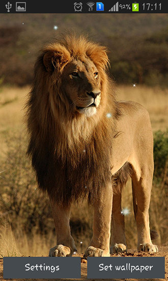Download Lions - livewallpaper for Android. Lions apk - free download.