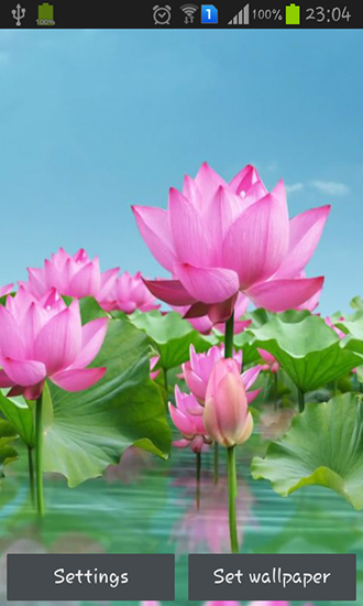 Summer night lotus pond illustration image_picture free download.