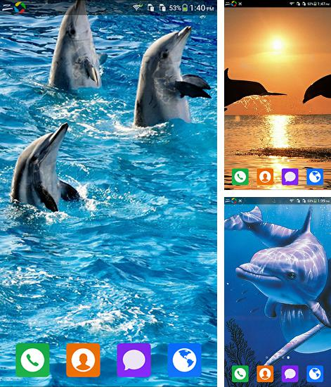 In addition to live wallpaper Winter snow by HD WALL MEDIA for Android phones and tablets, you can also download Lovely dolphin for free.