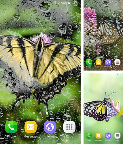 Download live wallpaper Macro butterflies for Android. Get full version of Android apk livewallpaper Macro butterflies for tablet and phone.