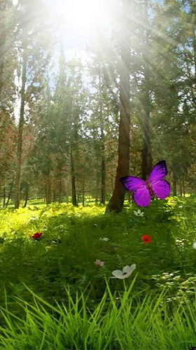 Screenshots of the Magic forest for Android tablet, phone.