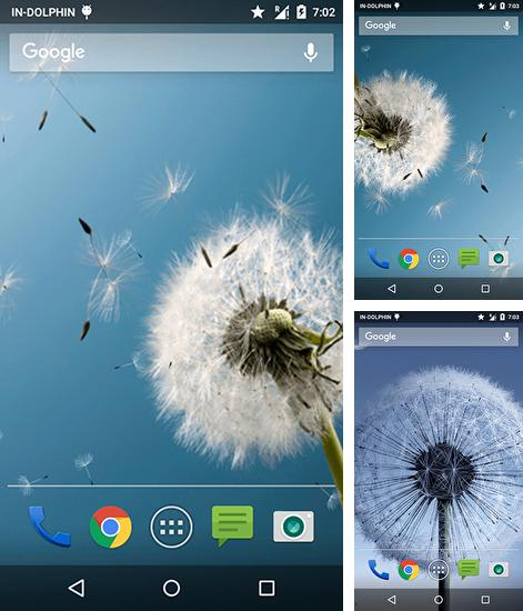 In addition to live wallpaper Sakura by Amax LWPS for Android phones and tablets, you can also download Magic neo wave: Dandelion for free.