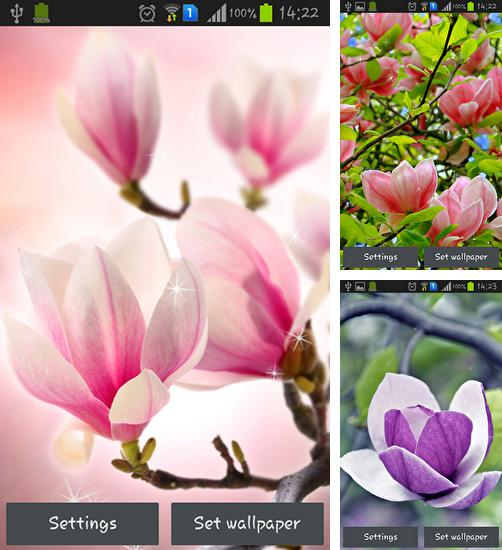 In addition to live wallpaper Waterfall and swan for Android phones and tablets, you can also download Magnolia for free.