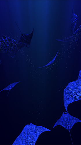 Download livewallpaper Mantaray for Android. Get full version of Android apk livewallpaper Mantaray for tablet and phone.