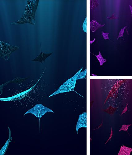 Download live wallpaper Mantaray for Android. Get full version of Android apk livewallpaper Mantaray for tablet and phone.