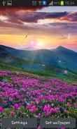 Mountain flower - download free live wallpapers for Android. Mountain flower full Android apk version for tablets and phones.