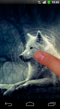 Download Night wolves - livewallpaper for Android. Night wolves apk - free download.