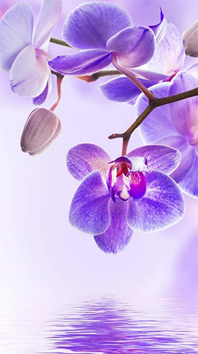 Orchid by Art LWP