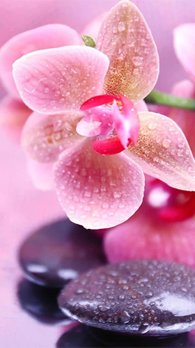 Download Orchid by Art LWP - livewallpaper for Android. Orchid by Art LWP apk - free download.