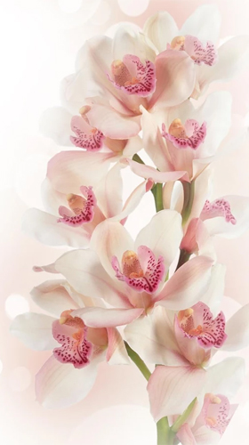 Download Orchid by Ultimate Live Wallpapers PRO - livewallpaper for Android. Orchid by Ultimate Live Wallpapers PRO apk - free download.