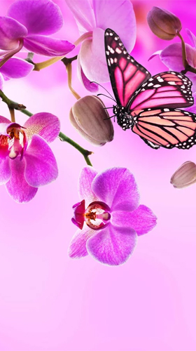 Capturas de pantalla de Orchid by Ultimate Live Wallpapers PRO para tabletas y teléfonos Android.