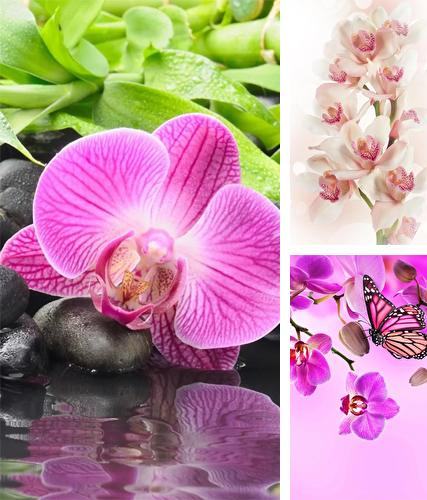 Orchid by Ultimate Live Wallpapers PRO