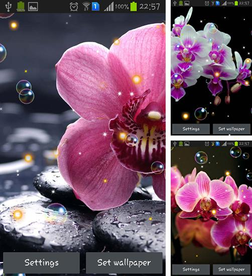 In addition to live wallpaper Shiny сolor for Android phones and tablets, you can also download Orchid HD for free.