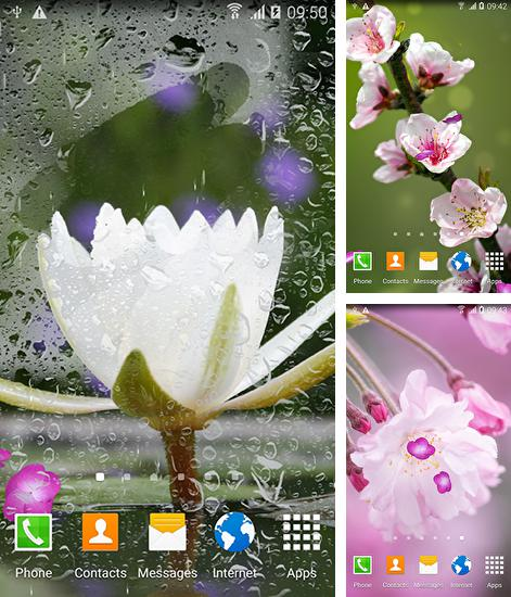 In addition to live wallpaper Wolf by orchid for Android phones and tablets, you can also download Oriental for free.