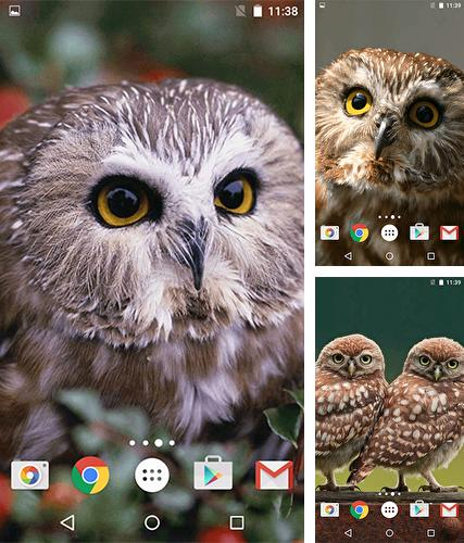 Owl by MISVI Apps for Your Phone