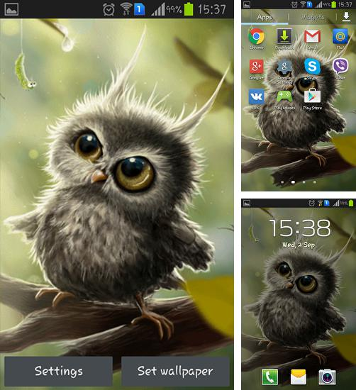 In addition to live wallpaper River by Wallpaper art for Android phones and tablets, you can also download Owl chick for free.