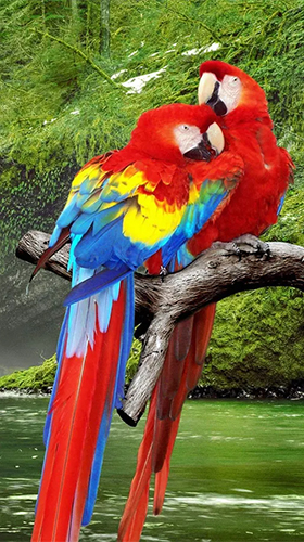 Download livewallpaper Parrot by Live Animals APPS for Android. Get full version of Android apk livewallpaper Parrot by Live Animals APPS for tablet and phone.