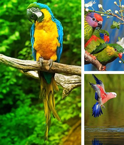 Kostenloses Android-Live Wallpaper Papagei. Vollversion der Android-apk-App Parrot by Live Animals APPS für Tablets und Telefone.
