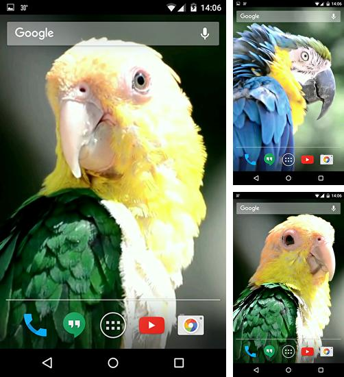 In addition to live wallpaper Greetings: March 8 for Android phones and tablets, you can also download Parrots for free.
